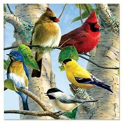 Favorite Songbirds Eco Magnet