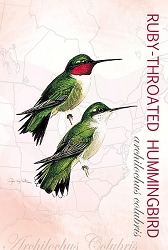 Ruby-Throated Hummingbird EcoNotes Set of 12