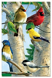 Favorite Songbirds EcoNotes Set of 12