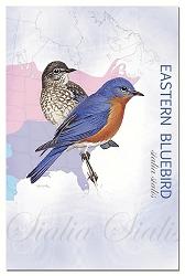 Eastern Bluebird EcoNotes Set of 12