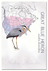 Great Blue Heron EcoNotes Set of 12