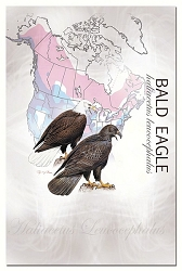 Bald Eagle EcoNotes Set of 12