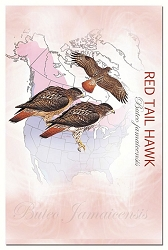 Red Tail Hawk EcoNotes Set of 12