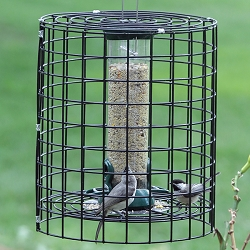Birds Choice Clever Clean Tube Feeder 12
