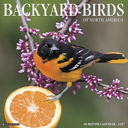 2017 Backyard Birds Wall Calendar
