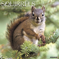 2017 Squirrels Wall Calendar