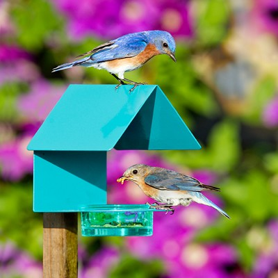 Fence/Post Bird Feeder Aqua