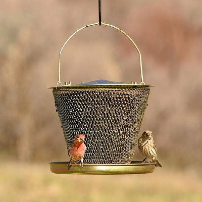 NO/NO Brass Single Tier Mesh Bird Feeder with Tray