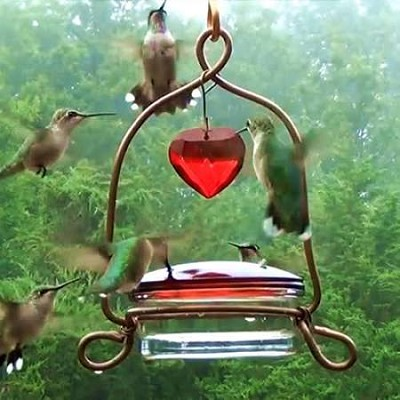Holland Hill Tweet Heart Lantern Hummingbird Feeder