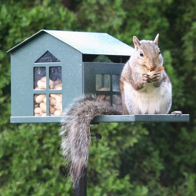 Food Pantry Metal Squirrel Feeder