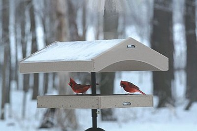 Birds Choice Recycled Covered Pole Mount Platform Feeder