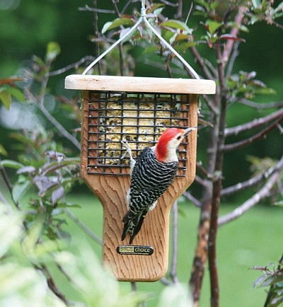 Birds Choice Single Cake Tail Prop Suet Feeder