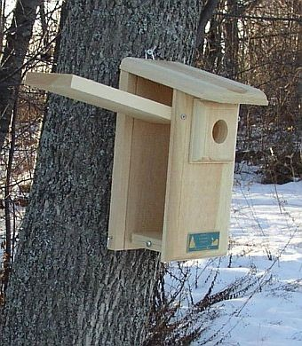 Conservation Observation Bluebird House
