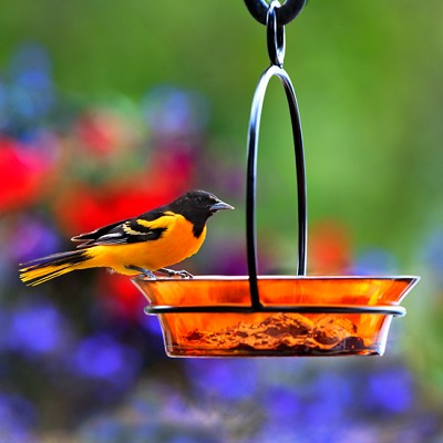 "Cuban Bowl Birdbath/Birdfeeder 8"" Orange"