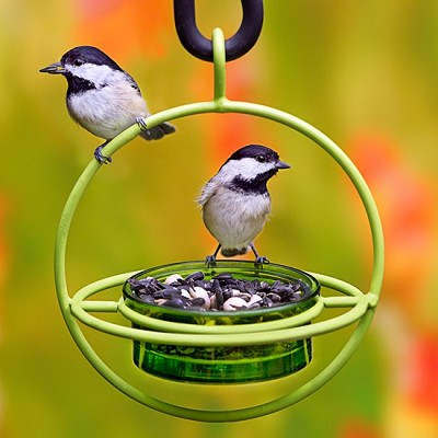 Sphere Hanging Feeder with Perch Lime
