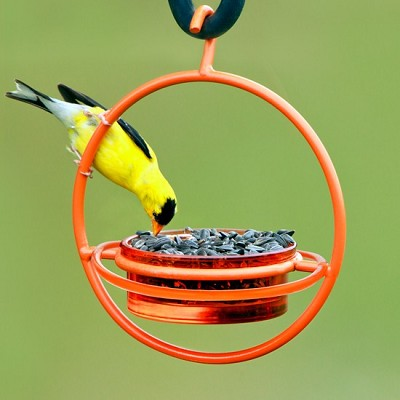 Sphere Hanging Feeder with Perch Orange