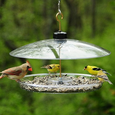 Droll Yankees Covered Platform Bird Feeder