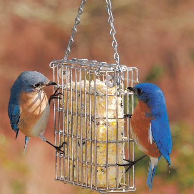 Premium Stainless Steel Suet Feeder