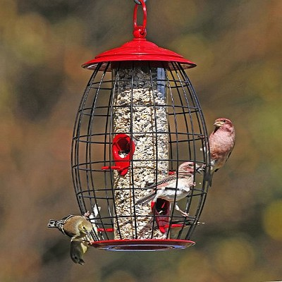 Belle Fleur Sweet Tweet Cafe Bird Feeder