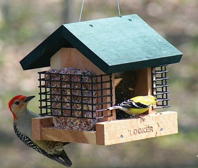 Double Suet and Seed Feeder
