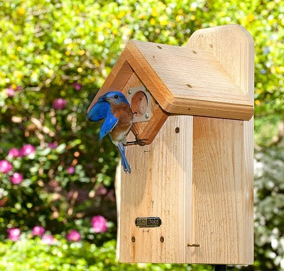 Cedar Eastern Bluebird House with Viewing Window
