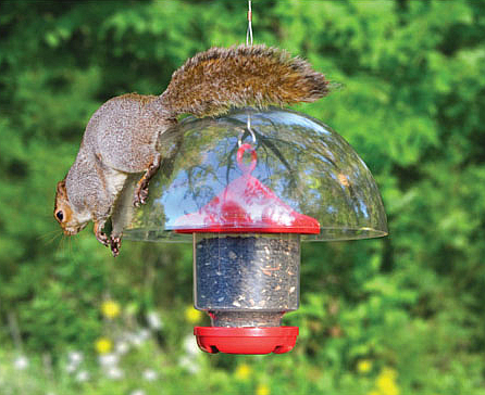 awesome clingers only feeder bird seed feeders bird feeders clingers only bird feeder with 12 quot diameter squirrel baffle 755